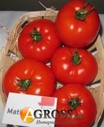 Семена томата Матиас F1 500 шт