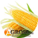Семена кукурузы Ларус (Малибу) F1 1000 шт