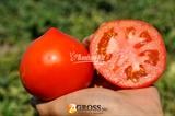 Семена томата Каста F1 (Супернова F1)