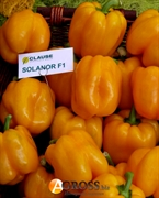 Семена перца Соланор F1 1000 шт