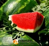 Семена арбуза Арашан F1 (WDL5003/ ВДЛ 5003 F1)