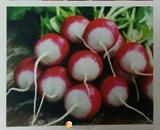 Семена редиса Полонеза (1 кг)