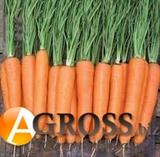 Семена моркови Элеганза  F1 (калибр. 1,6-1,8) 100 000 шт.