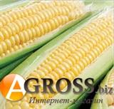 Семена кукурузы Растлер F1 5000 шт