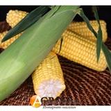 Семена кукурузы Оватонна F1