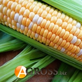 Семена кукурузы Мраморная F1 1000шт