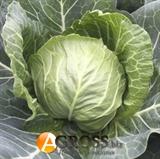 Семена капусты Зариссима F1 (калибр.) 1000 шт