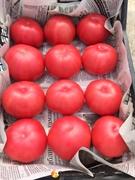 Семена томата Мей Шуай F1 500 шт
