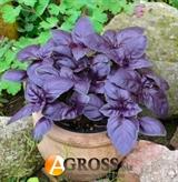 Семена базилика фиолетового Гранат 100г