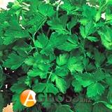 Семена петрушки Коммон (Комун) 500г