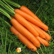 Семена моркови Карвора F1 (калибр.2,0 - 2,2) 200 000 шт