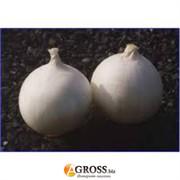 Семена лука озимого белого Невикс F1 1 кг