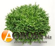 Семена салата Сигал (драже) 1000 шт