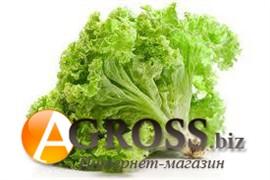 Семена салата батавия Афицион (драже) 1000 шт