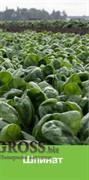 Семена шпината Тромбон F1 50 000 шт