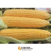 Семена сахарной кукурузы Драйвер F1