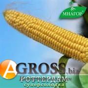 Семена кукурузы Роттердам F1 1000 шт