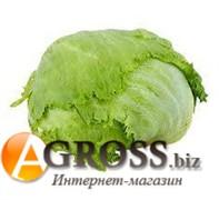 Семена салата Гондар (тип Айсберг) 5000 шт