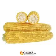 Семена кукурузы 1707 F1