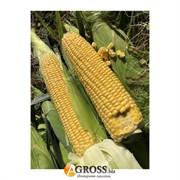 Семена кукурузы 1801 F1