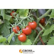 Семена томата-черри Френзи F1