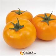 Семена томата оранжевого Ямамото (KS 10 F1)