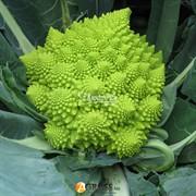 Семена цветной капусты Джитано F1