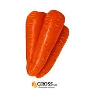 Морковь Нью Курода 2,4 мм Asia