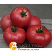 Семена томата SC 2121 F1
