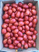 Семена томата 3402 F1 (Хайнц) (Heinz)