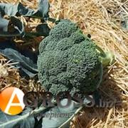 Семена капусты брокколи Нексос F1