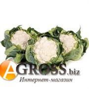Семена цветной капусты Алстон F1 1000 шт
