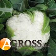 Семена цветной капусты Саборд F1