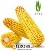 Кормовая кукуруза Марсер 250