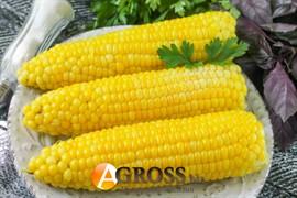 Семена кукурузы Византия F1