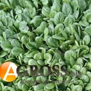 Семена шпината Акадия F1