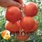 Семена томата Лилос F1 - фото 3617
