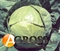 Семена капусты Балбро F1  - фото 3702