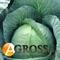 Семена капусты Томас F1  - фото 3709