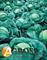 Семена капусты Атрия F1 - фото 3714