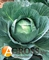 Семена капусты Аммон F1 2500 шт - фото 3730