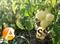 Семена перца Аден F1 500 шт - фото 3777