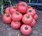 Семена томата Демироса F1 250 шт - фото 4060