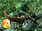 Семена арбуза Кримсон Делайт F1 100 гр (около 2000 шт) - фото 4218