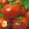 Семена томата Полфаст F1 - фото 5595