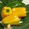 Семена перца Джемини F1 - фото 5606