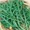 Семена руколы Гурман (Пасьянс) - фото 5951