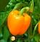 Семена перца Мицар F1 100 шт - фото 5989