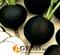 Семена редьки Круглая черная 250 г - фото 6285