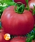 Семена томата Канна 218 F1 500 шт - фото 6758